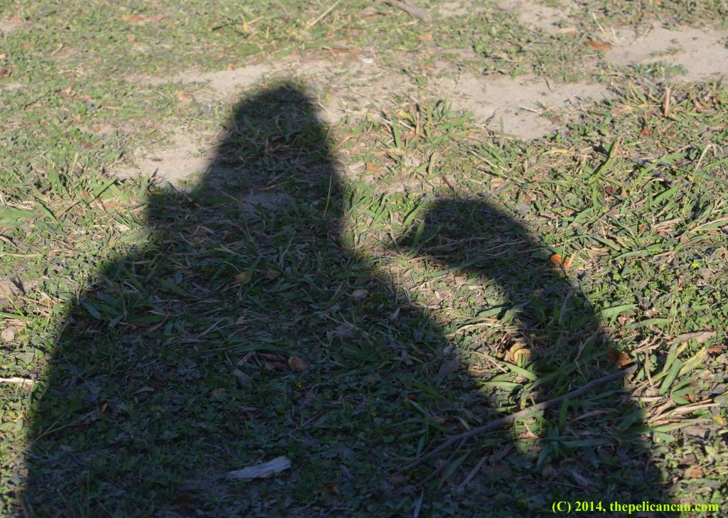 Shadow of a human and a goose at White Rock Lake in Dallas, TX
